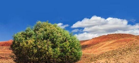 المغرب والأمم المتحدة يحتفيان باليوم العالمي الأول لشجرة الأركان