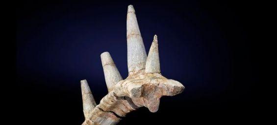 العثور على بقايا نوع جديد من الديناصورات عاشت في المغرب قبل ملايين السنين
